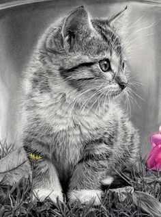 Gotcha - Cat detail by A-Falcon-Velazquez.deviantart.com on @deviantART