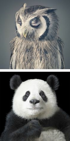 More Than Human: Photo Series by Tim Flach | Inspiration Grid | Design Inspiration