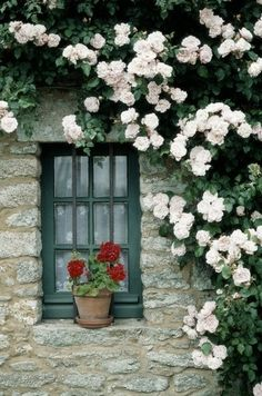 Small but very pretty window with a geranium on the sill and climbing roses.