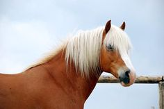Norman Norman, Horses, Animals, France, Bayern, Animales, Animaux, Horse, Words