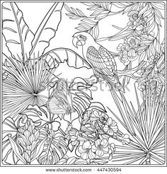 Tropical Wild Birds And Plants Garden Collection Coloring Page Book For Adult Older Children Outline Vector Illustration