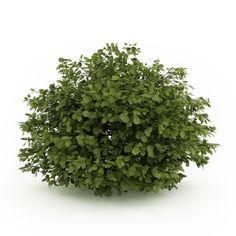 volume of plants - Google Search