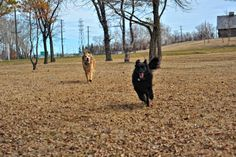 kilcona park may 1st-2014