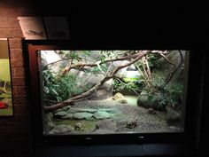 zoo reptile cages for sale - Google Search
