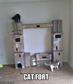 I am so doin' this for my cats!