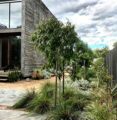 Modern Native Garden King S Landscaping Garden Ideas Contemporary Garden Design, Landscape Design, Modern Landscaping, Front Yard Landscaping, Modern Australian Garden, Garden King, Coastal Gardens, Garden Inspiration, Garden Ideas