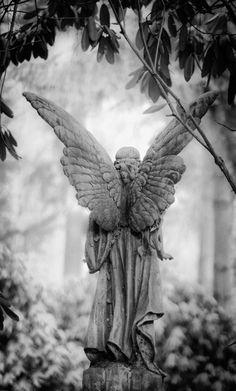 angel backside