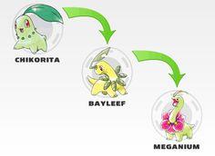 Chikorita evolution