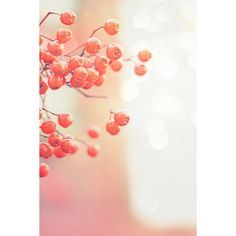 myNetImages ❤ liked on Polyvore featuring backgrounds, pics, pictures, photos and foto