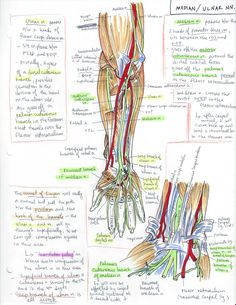 minuiko: Forearm - The Oxford Handbook of Medblr