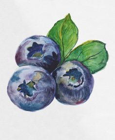 Blueberries Watercolor Art Print by funstuff Watercolor Fruit, Fruit Painting, Watercolor Paintings For Beginners, Dark Art Drawings, Mini Canvas Art, Indigenous Art, Art Sketchbook, Painting & Drawing, Art Projects