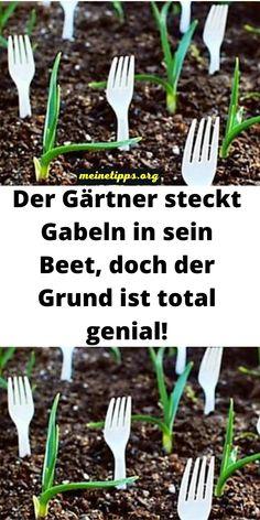 Garden Paths, Garden Landscaping, Garden Tools, Bonsai, Crate Crafts, Green Garden, Woodworking Crafts, Purple Flowers, Good To Know