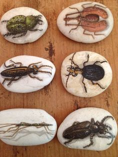 Set+Of+6+Hand-Painted+Beetle+Bug+River+Rocks+From+Thailand+Signed+By+The+Artist!+ Pebble Painting, Pebble Art, Stone Painting, Painted Rocks Kids, Painted Pebbles, Hand Painted, Painted Stones, Pebble Stone, Stone Art