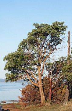 Learn more about trees since without trees we humans would not exist on this beautiful planet.