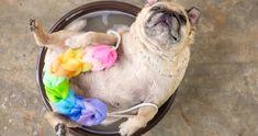 今年は戌年だから犬ブーム! かわいい犬動画でメロメロに癒されちゃおう♡ Sponsored byByteDance Inc.