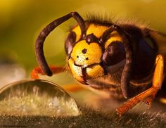 """I have a book called """"Alien Empire"""". It's full of photographs of insects that appear """"alienish"""" to us. I'm finding these macro shots of insects to be really amazing!"""