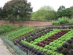 Современный огород и его дизайн: красивые грядки на вашей даче (35 фото)