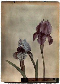 Leendert Blok: Silent Beauties: Color Photographs from the 1920s (publ. 2015)