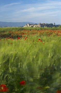 ~Poppies barley in Old Cite, Carcassonne, France~ wonderful place------LOVE the foreground treatment on this Photography Gallery, Poppy Photography, Landscape Photography, Wonderful Places, Beautiful Places, Carcassonne France, Languedoc Roussillon, Tours France, Holiday Places