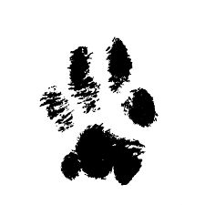 Image result for cat paw print tattoo