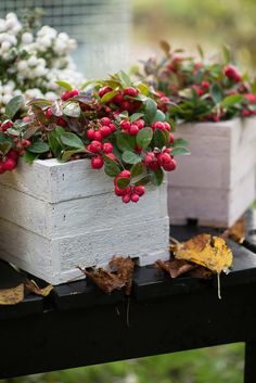 Container gardening is a fun way to add to the visual attraction of your home. You can use the terrific suggestions given here to start improving your garden or begin a new one today. Your garden is certain to bring you great satisfac Handmade Home, Winter Plants, Pot Lights, Harvest Party, Fall Cocktails, Outdoor Planters, Garden Features, How To Make Tea, Autumn Garden
