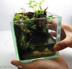 I wish I had the patience and know-how to create a mini-terrarium. Water Terrarium, Aquarium Terrarium, Nano Aquarium, Aquarium Design, Terrarium Plants, Planted Aquarium, Aquarium Fish, Vivarium, Paludarium