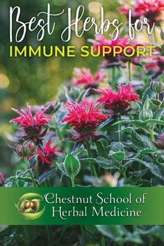 The Best Herbs for Immune Support ~ A brand new library of articles on herbs and the immune system from the Chestnut School of Herbal Medicine. To health!!  #ChestnutSchool #herbs #herbalism #herbalife #immunesystem #immunity #immuneboosting