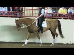 Linda Parelli's Game of Contact works wonders on this demo horse and rider in Harrisburg, PA!