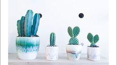 Kaktus Kbh.