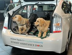 Three professional therapy dogs check out a Toyota Prius awarded to Summit Assistance Dogs in Burlington, Wash., on Sept. 19, 2011. The Prius was awarded as part of Toyota's #100Cars for Good program.