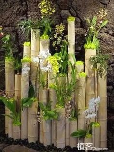 Love the planted bamboo, great idea. Reclaimed Bamboo Logs Adorned with White Phalenopsis Orchid Plats, Oncidium Orchids and Wild Cats. Created by MartinRoberts Design