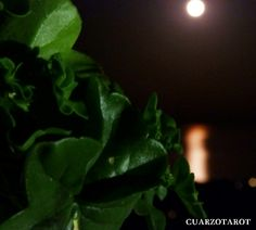 Este baño es ideal para realizarlo antes de cualquier otro ritual de luna llena. https://www.cuarzotarot.es/la-luna/la-luna-llena #FelizSábado #FelizDía #SuerteLunaLlena
