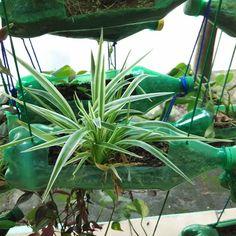 Memanfaatkan botol bekas untuk pot tanaman :)