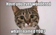 Funny cat meme name fridge magnet 5 x - Funny Cat Quotes Funny Animal Memes, Funny Cats, Funny Animals, Cute Animals, Funny Memes, Cats Humor, Funny Cat Quotes, Funny Cat Captions, Baby Animals
