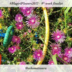 #BlugirlFlowers2013 Instagram Photo Contest finalist @aikomatsuura