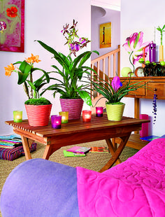 Colorfull ambience ,styliste Philippe de Stefano for botanic