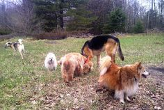 Ottawa Valley Dog Whisperer : DIY Natural, Herbal, Homeopathic Dewormers for Dogs and Cats
