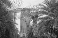 Marina Bay Sands Through the Palms - by Jane Walker © 2017 Singapore Singapore, Marina Bay Sands, Palm, Life, Outdoor, Outdoors, Outdoor Games, The Great Outdoors, Hand Prints