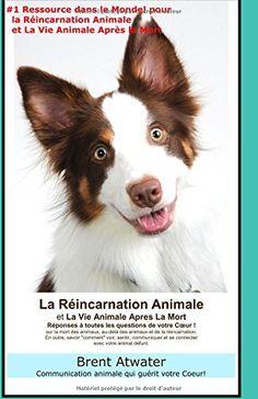 La Reincarnation Animales et La Vie Animale Apres La Mort…