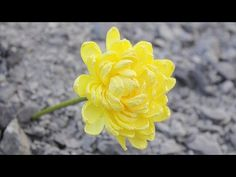 How to make Paper Flower 2017 - Flower Making of Crepe Paper - DIY Paper Crafts - YouTube