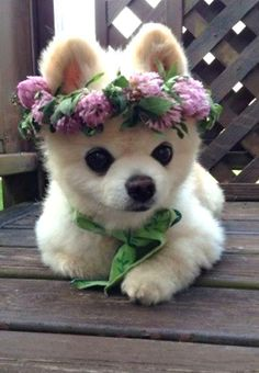 Even dogs love floral crowns :)