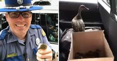 An officer rescued a family of ducks from a busy highway in Washington state.