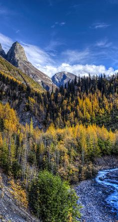 Nicholai Butte...Dan Creek in Wrangell St. Elias National Park, Alaska.  alaska, wrangell st elias national park, fall, fall colors, alaska wilderness prints, autumn colors, red, yellow, fred denner