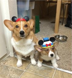 Our humans went to Disneyland and all we got were these stupid hats.