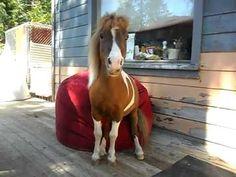 Mini Horse sits on a Comfy Sack Bean Bag Chair