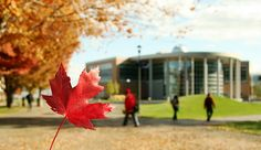 Maple leaf forever @ TRU by Thompson Rivers, via Flickr  Thompson Rivers University in Kamloops, BC, Canada    In the background is the International Building. Student Exchange Program, Education And Development, Business And Economics, British Columbia, Rivers, University, Around The Worlds, Canada, Building