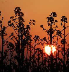 Dusk II. Dusk, Celestial, Explore, Sunset, Outdoor, Photos, Backgrounds, Sunsets, Outdoors