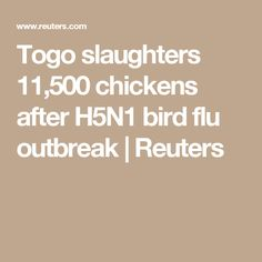 Togo slaughters 11,500 chickens after H5N1 bird flu outbreak | Reuters
