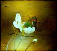 golden light white flowers w little green by CheyAnneSexton
