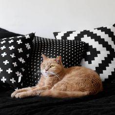 Gatinha fofinha posando com as nossas almofadas 😍 | #repost @apartamento.tetris Essa lindona. ❤ . #home #love #